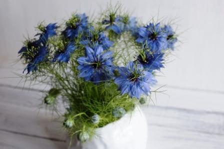 černuška modrý kvet v hlinenej váze