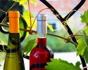 Nie je víno ako víno, spoznajte tieto: arónia víno, železité a žalúdočné víno…