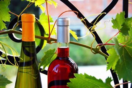 červené a biele fľaše na víno medzi listami viniča