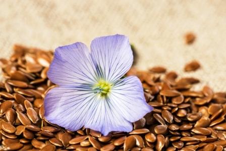 ľanové semienko a ľanový kvet