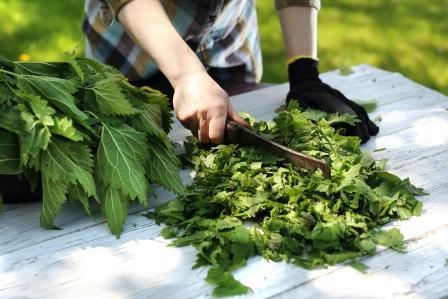 Žena seká zelené listy žihľavy