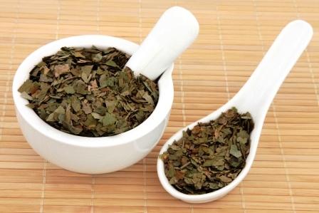 Ginkgo biloba bylina použitá v bylinnej medicíne