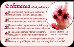 info obrázok echinacea