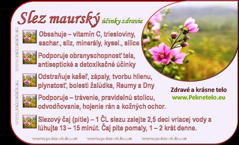 Info obrázok slez maurský