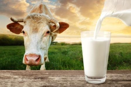 Krava na lúke a pohár mlieka, sušené mlieko