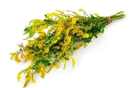 Lieciva rastlina komonica lekarska