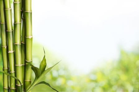 bambusove vyhonky