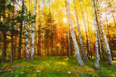 brezovy les breza