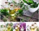Zber byliniek a liečivých rastlín podľa mesiaca
