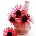Liečivé rastliny - bylinky