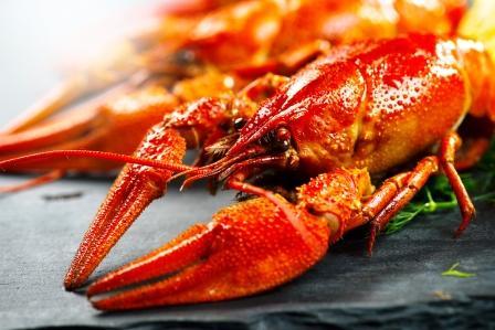 homár - lobster uvarený na podložke