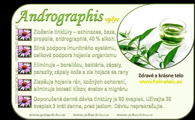 info andrographis tinktura