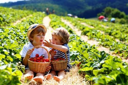 jahody jedia deti