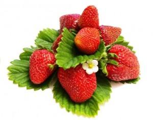 jahody - plody a kvet