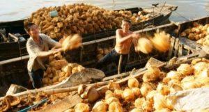 Kokosové orechy na lodi