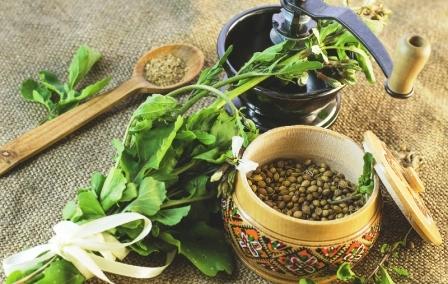 koriander čerstvý listy a mlynček na korenie