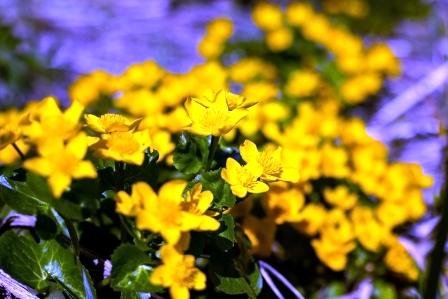 kvitnuce kvety