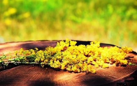 lipkavec syridlovy - kvet
