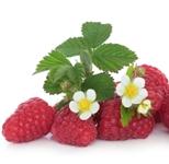 ovocie maliny