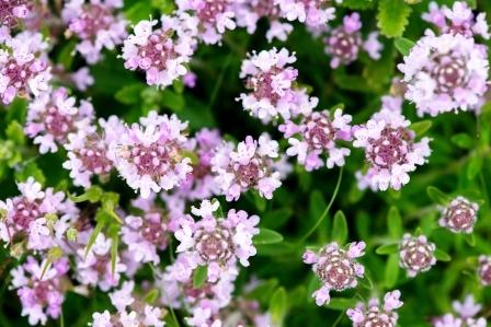 materina duska - kvety
