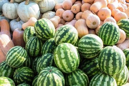 melony a tekvice