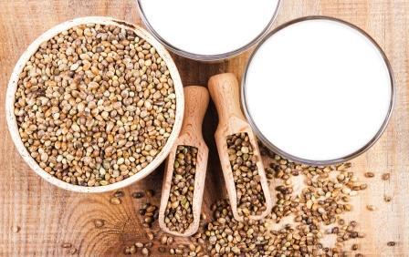 mlieko z konopných semienok