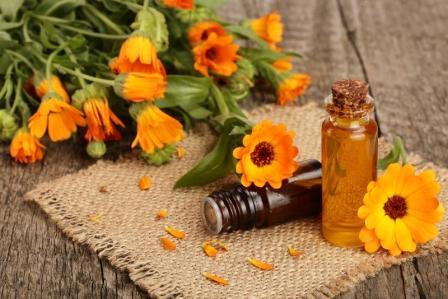 olej s cerstvymi kvetmi nechtika