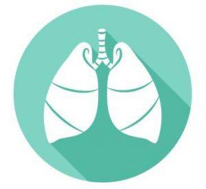 pľúca