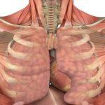 pľúca dýchacie cesty