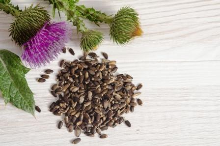 pestrec mariansky a semienka sú vhodné aj pri detoxikácii