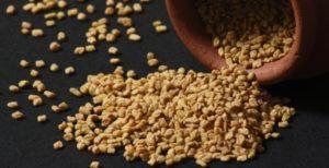 senovka grecka semena