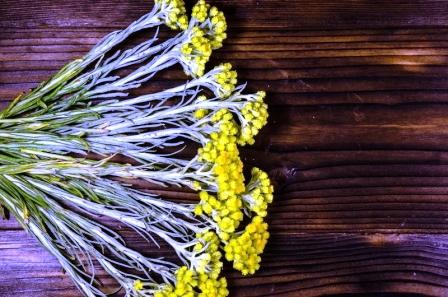 slamiha piesocna-lieciva rastlina