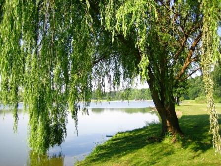 strom pri jazere