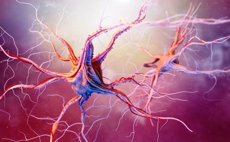 tinktura nervovy system