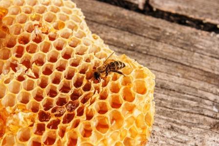 včela na pláste so sladkým medom
