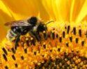 "Včela medonosná – ""Ďakujeme, že si"""