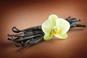 vanilkove lusky a vanilkovy kvet