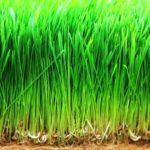 jačmeň zelené doplnky