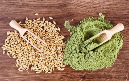 semená jačmeňa a prášok zo zeleného jačmeňa