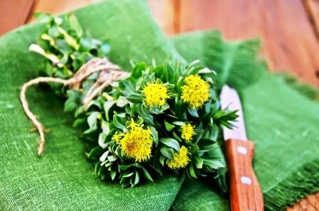 zviazane kvety rozchodnice
